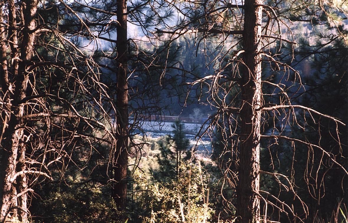 Hitchhiking Trip (Masters) - 027.jpg - View of train from I-5